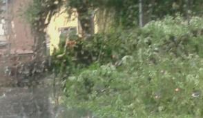 Forte vento e pioggia si abbattono su chivassese e torinese