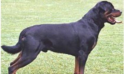 Attenzione, c'è un rottweiler libero vicino al cimitero