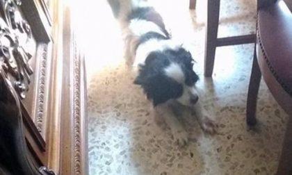 """Dopo essere stata """"multata"""" abbandona il suo cane dai vigili"""