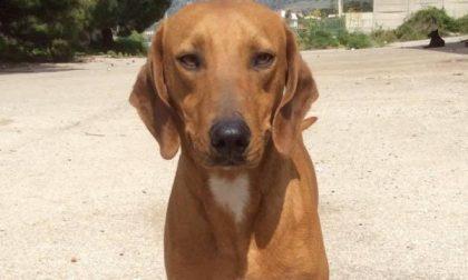 San Sebastiano: hanno legato un cane al guard rail del ponte