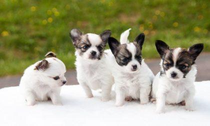 Domenica 4 ottobre Giornata mondiale degli Animali
