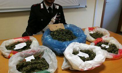 Un chilo di marijuana nel garage a Castiglione: arrestato