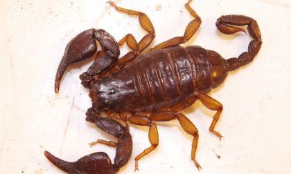 Aiuto, trovati scorpioni vicino al Comune