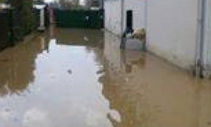 Appello urgente per il canile di Moncalieri devastato dall'acqua