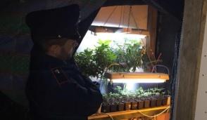 Nella sua cascina coltivava droga: arrestato 40enne