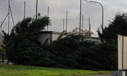 Grosso albero abbattuto dal maltempo