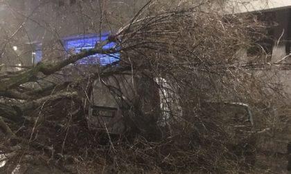 Cade un albero, corso XI Febbraio è aperto