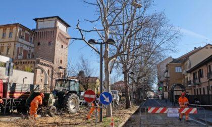 Settimo, tecnici al lavoro per la potatura alberi in piazza Vittorio