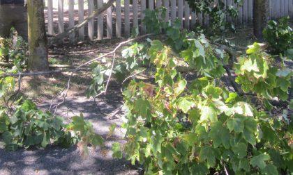 Alberi a terra e tettoie scoperchiate: i danni del violento temporale