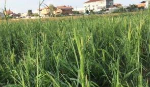 I nubifragi degli ultimi giorni mettono l'agricoltura