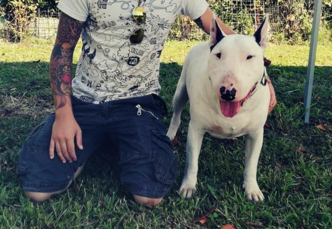Bull terrier Sid ancora in canile IL VIDEO