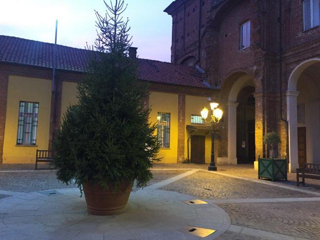 Genova, in piazza De Ferrari arriva l'albero di Natale foto