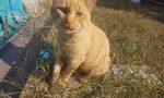 Gatto scomparso si cerca disperatamente