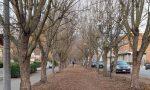 Taglio alberi viale Po 5Stelle contro Comune