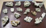 Coralli importati illegalmente donna fermata