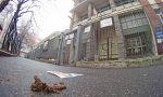 Escrementi sui marciapiedi il primato è piemontese