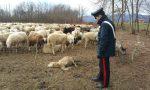 Denunciati pastori parenti dei killer di Castelrosso di Chivasso