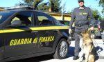 Droga in stazione i cani della Finanza arrestano un uomo