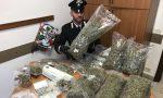 """Arrestato """"rappresentante"""" di marijuana ECCO CHI E'"""