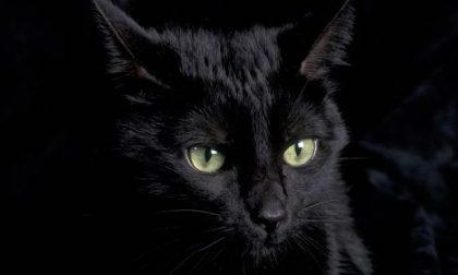 Gatti neri spariti usati riti del Solstizio