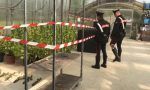 Vivaio di marijuana biologica, arrestato un giardiniere e sua moglie | FOTO e VIDEO