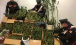 Chiuso laboratorio per la produzione di marijuana, arrestato un uomo LE FOTO