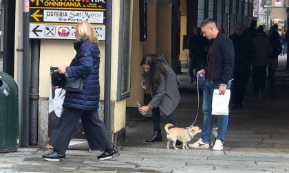 Il cane fa la pipì, padrone non pulisce: multa da 500 euro