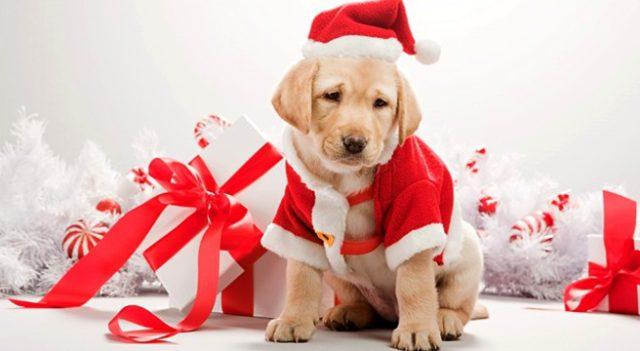"""Truffe dei """"cani di Natale"""" in Piemonte"""