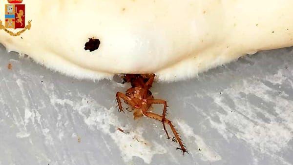 scarafaggi nel cibo: chiusa una pizzeria a torino.