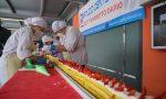 San Mauro ha la torta di fragole più lunga del mondo IL VIDEO