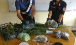 Due fratelli gestivano una serra di marijuana, un arresto e una denuncia