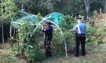 Scoperte quattro piantagioni illegali di cannabis e marijuana FOTO e VIDEO