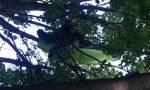 Cade col parapendio e rimane appeso a un albero IL VIDEO