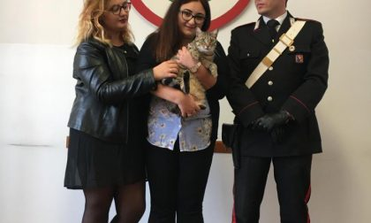 Chiede riscatto per restituire il gatto, arrestata per estorsione