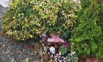 Vandalizzata la tomba della figlia al cimitero, lo sfogo della mamma della bimba