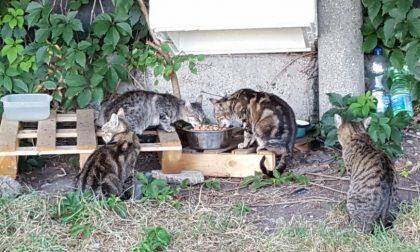 Emergenza colonie feline, troppi gatti abbandonati
