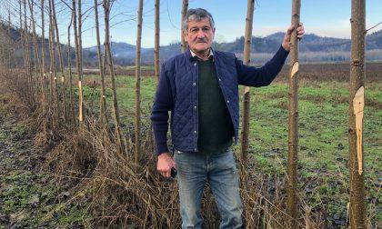 Tagliano 150 alberi solo per fare un dispetto