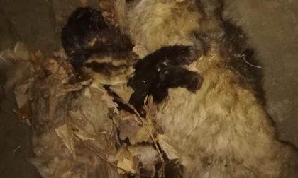 Strage di gatti avvelenati: caccia all'autore del gesto