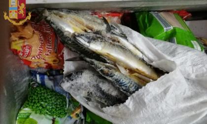 Alimenti in cattivo stato di conservazione scoperti in un negozio LE FOTO