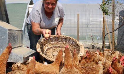 Nuovo raid nell'azienda agricola: rubate attrezzature per 10 mila euro
