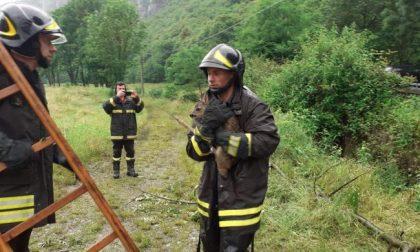 Capriolo cade nel canale: salvato dai vigili del fuoco