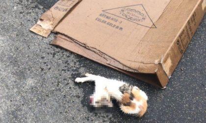 Bimbo di 5 anni lancia una gattina di tre mesi dal balcone