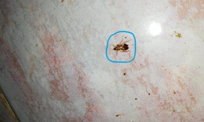 Olio esausto nella friggitrice e insetti in cucina, sanzionato titolare LE FOTO