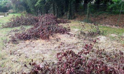 Cade un grosso albero: chiuso il parco giochi a Brandizzo