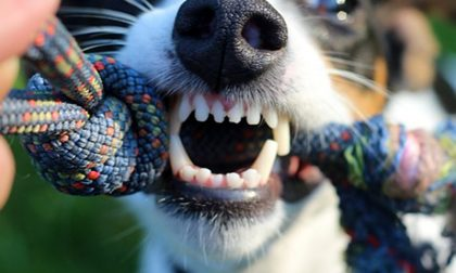 Costretta a uccidere a coltellate il cane di casa mentre azzanna la mano del marito