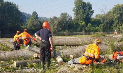 Amici del Po e Aib tagliano gli alberi sradicati