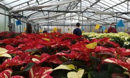 Via libera alla vendita di piante e fiori durante tutta la settimana