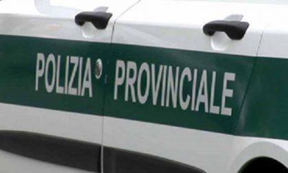 La Città metropolitana di Torino assume agenti di Polizia Locale