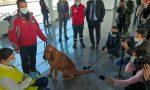 All'aeroporto arrivano i cani anti Covid LE FOTO