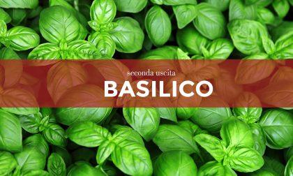 Tutti ortisti, da oggi mercoledì 24 in edicola con la Nuova Periferia i semi di basilico